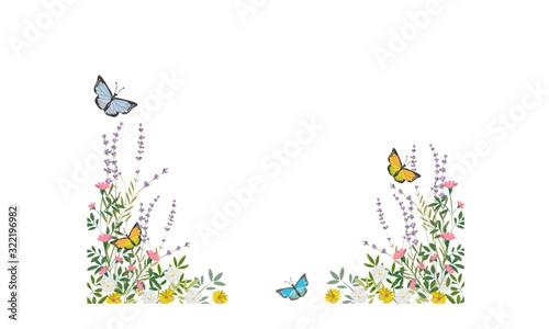 Obraz na plátně ハーブと蝶