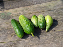 Freshly Picked Cucumbers On A Wooden Table. Close-up Of Cucumbers On A Sunny Day