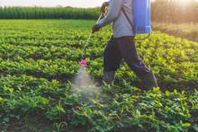 Farmers Inject Fertilizer Into...