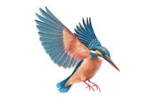 Kingfisher Bird Wildlife Beaut...