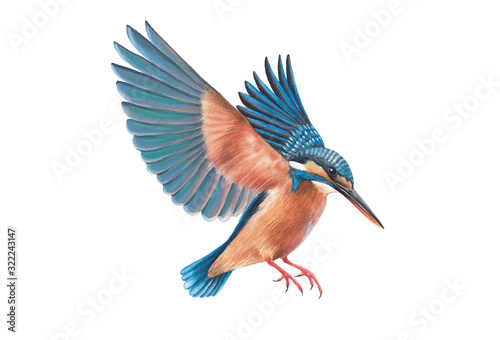 kingfisher bird wildlife beauty bird blue water color on white background Fototapete