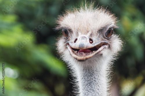 Fotografía avestruz