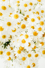 Chamomile Daisy Flowers On White Background. Flat Lay, Top View.