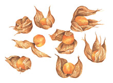 Physalis Fruit Berry Set. Groundcherries, Inca Berry, Cape Gooseberry. Isolated On White Background. Watercolor Illustration.