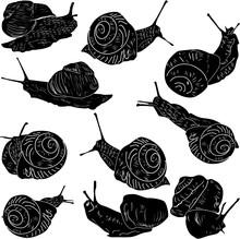 Ten Edible Snail Sketches Isol...