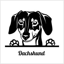 Dog Head, Dachshund Breed, Black And White Illustration