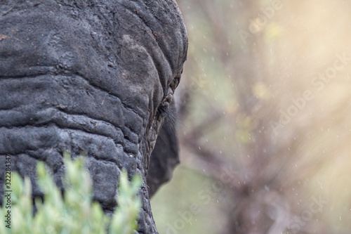 Photo Elephant in the bushes in South Africa