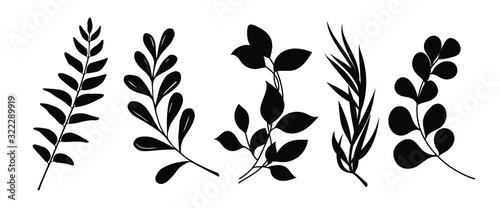 Obraz Set of leaves silhouette of beautiful plants, leaves, plant design. Vector illustration . - fototapety do salonu