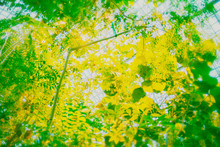 Green Leaves Of A Tree