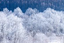 北海道の冬の風景 富...
