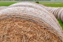 Round Hay Bales Close Surround...