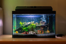 Small Fish Tank Aquarium With ...