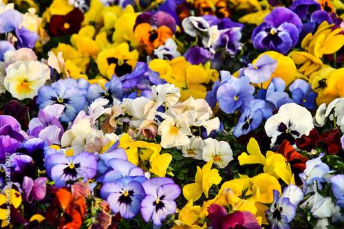 Fotografija flowers on a background, photo as a background