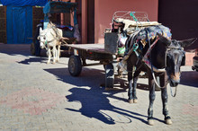 Group Of Mules And Donkeys As A Working Animals In Morocco Berber Markets
