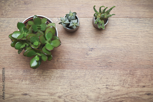 Office or home office desk with decorative plants and cactus on wooden table Wallpaper Mural