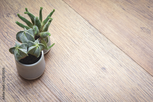 Office or home office desk with decorative plants and cactus on wooden table Canvas Print