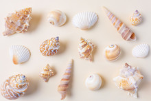 A Variety Of Seashells On A Li...
