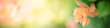 Closeup nature view of beautiful flower on blurred background in garden with copy space for text using as summer background natural flower plants landscape, ecology, fresh cover page concept.