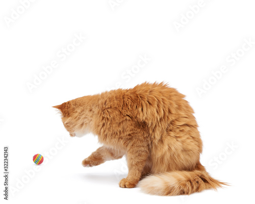 adult fluffy red cat plays with a red ball on a white background Wall mural