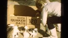 DILLER NEBRASKA-1968: Kittens ...