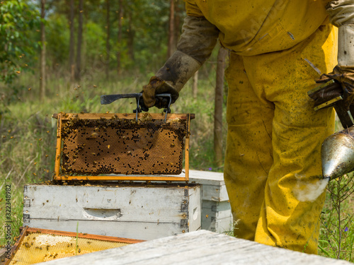 Beekeeper man working in hives, controlling production Canvas Print