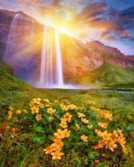Panel Szklany Krajobraz Incredible sunset on Seljalandsfoss. One of the most beautiful waterfalls on the Iceland, Europe. Popular and famous tourist attraction summer holiday destination in on South Iceland. Travel postcard