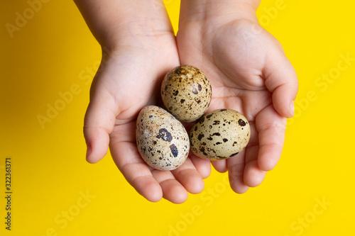 Girl holding Easter quail eggs, handful of quail eggs Fototapete