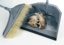 Removing Two Dead Rats Using G...