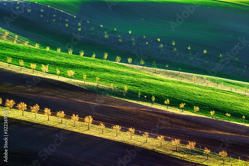 Obraz Green, brown and yellow waves of the agricultural fields of South Moravia, Czech Republic. Rural spring landscape with colored striped hills with trees. Can be used like nature background or texture - fototapety do salonu