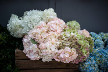 Multi-colored Hydrangea In Wooden Square Boxes On Black Wall Background, As A Decoration Of The Garden