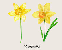 Watercolor Botanical Illustrat...