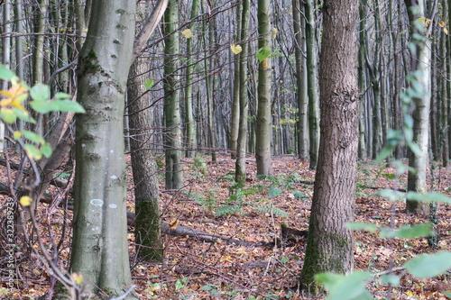 Im Wald 01 © Spotlight Nord