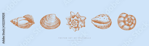 Set of hand-drawn realistic seashells Wallpaper Mural