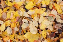Fallen Leaves In Autumn Fall