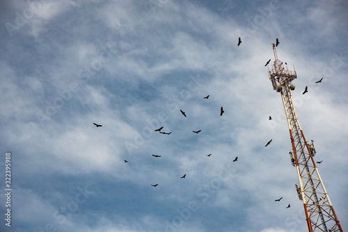 Photo Birds Flying around a Power tower