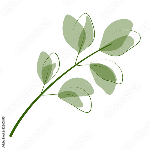 Fototapeta Beautiful  leaves isolated on white background.  Vector illustration. EPS 10 obraz na płótnie