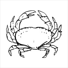 Crabs. Illustration For The Me...