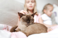 Portrait Of Burmese Cat With E...