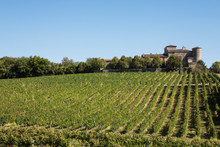 France, Nouvelle-Aquitaine, Department Gironde, Bordeaux Wine Region, Vineyards And Chateau Lacaussade