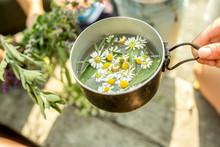 Fresh Chamomile In Pot With Wa...
