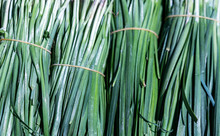 Chinese Chives, Garlic Chives; Food Background