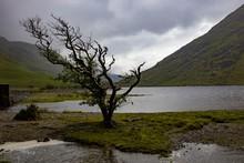 Lone Windswept Tree At Doo Lou...