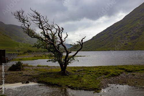 Lone windswept tree at doo lough, county mayo, republic of ireland Fototapet