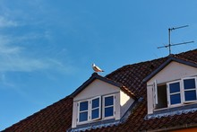 Seagull Sitting On The Roof Of...
