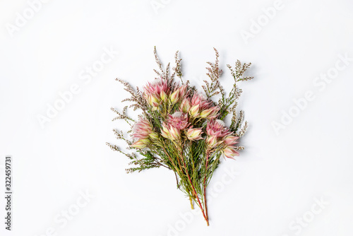 Obraz na plátně Beautiful Blushing bride Protea flower and Thryptomene (a delicate white pink flower) on a white background