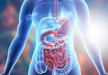 Human Body Digestive System An...