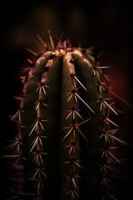 Close-up Of Cactus Thorns.