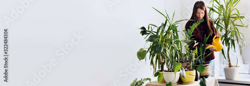 Fototapeta Gardening houseplants at home Young woman watering home plants in room at home obraz
