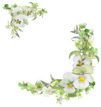 Pansy Light Green Flowers Two ...