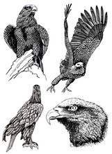 Graphical Set Of Eagles Isolat...